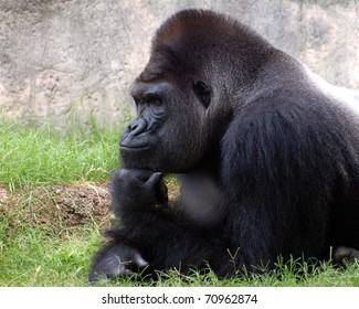 Gorilla Thinking