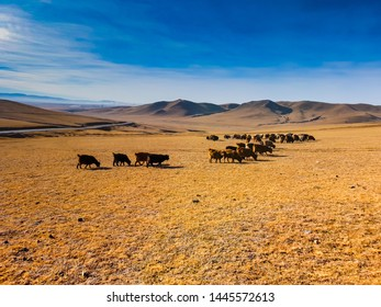 Gorkhi-Terelj National Park is one of the national parks of Mongolia. It is a great place to start your adventure, or to explore some of the key attractions nearby to the capital city.