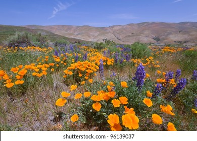 Gorman Wildflower
