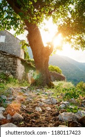 Gornji Stoliv ruines (Boka Kotorska, Montenegro 2018)