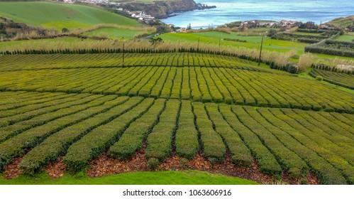 Gorreana tea plantation Azores Sao Miguel Island