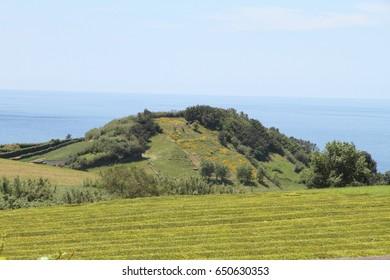 Gorreana is a tea plantation in Sao Miguel island Azores Portugal