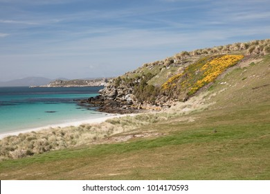 Gorse covered cliff, Carcass Island in the Falkland Islands