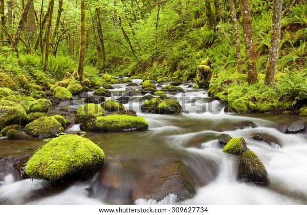 Gorton Creek through lush rainforest in the Columbia River Gorge, Oregon, USA.
