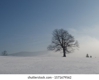 Gory Zlote (Goden Mountains) / Rychlebske Hory (Rychlebske Mountains) in snowy sunny winter. Silhouette of lonely trees on misty background.  Sudety Mountains, Czech Republic  - Shutterstock ID 1571679562