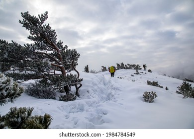 Goseong-gun, Gangwon-do, South Korea - March 07, 2021: Back view of a hiker walking on snow covered trail with pine trees on Seongindae Peak of Seoraksan Mountain