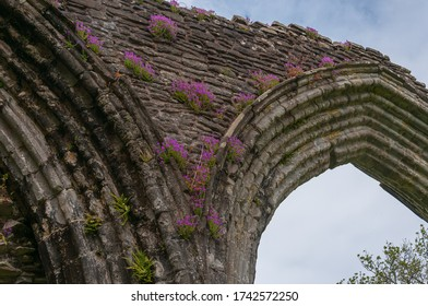 Gothic arch with flowers in the Inchmahome Priory. Concept: religion and spirituality, mysterious and fantastic places in Scotland