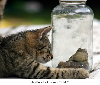 I gotta to get outta this place.  A cat looking at two toads in a jar.