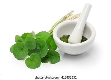 gotu kola, asiatic pennywort, centella asiatica, ayurveda herbal medicine