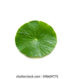 Gotu Kola, Centella Asiatica, Asiatic Pennywort, Hydrocotyle, Tiger Herbal, Indian pennywort