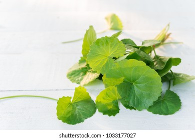 Gotu kola or Centella asiatica on white background
