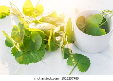 Gotu kola, Centella asiatica,Asiatic Pennywort on wood background