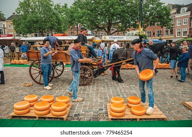 Gouda, southern Netherlands - June 29, 2017. Young people carrying cart with cheese at the end of Market Square fair in Gouda. Very popular day trip destination, is famous for its tasty Gouda cheese.