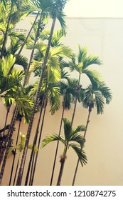 A goup of tropical, lush green palm trees in front of a big white building on a sunny summer day.