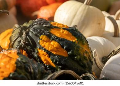 Gourds at the Circleville Pumpkin show