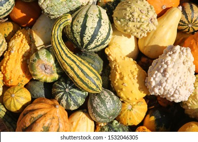 Gourds. Various types, sizes and varieties of Gourds for sale at a Farmers Market. Colorful Gourds for sale.