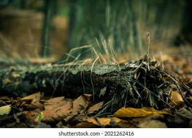 A gourgeus treetrunk deep in the woods
