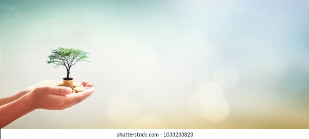 Government pension fund concept: Human hands holding stacks of golden coins and growth tree on blurred green nature autumn sunset background