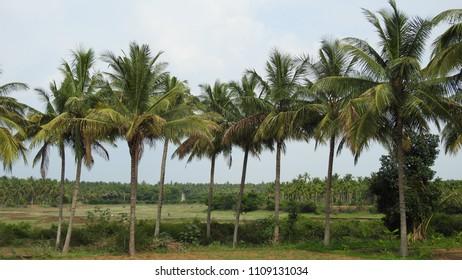 Govindanahalli village near Panchalingeshwara Temple,  Mandya district, Karnataka state, India.
