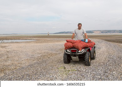 Gower, UK: July 11, 2018: A cockle picker is driving towards the camera on a quad bike which is loaded with sacks of cockles. The cockle industry is a thriving business off the north Gower coast.