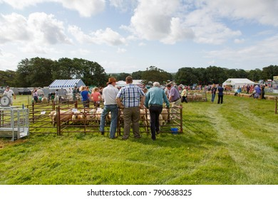 Gower, Wales, UK: August 03, 2014: Farmers stand around the sheep pens at an agricultural show. They are talking and looking at the livestock while waiting for the judge to inspect their animals.