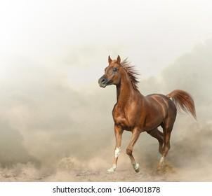 Graceful arabian stallion in prairies