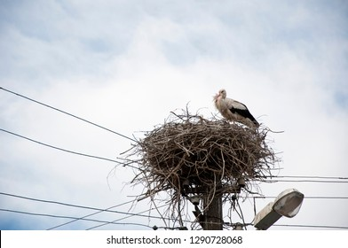 A graceful bird. Large migratory bird with black and white plumage. White stork and nestling on cloudy sky. Stork family. Stork in stick nest on electrci pole. Stork returning to the nest in spring.
