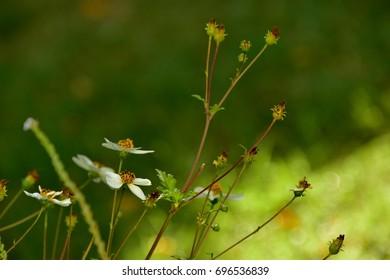 Graceful little daisy flower on a green background