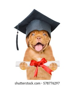 Graduated dog holds a diploma in his paws. isolated on white background