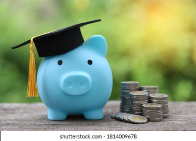 Graduation hat on blue piggy bank with stack of coins money on nature green background, Saving money for education concept