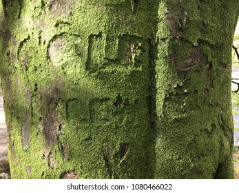 Graffiti on tree, Rydal Water and Grasmere, Lake District, Cumbria, England