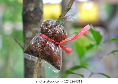 Grafting, Propagation of trees by means of branches to increase productivity.