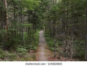 Grafton Woods Trail, Kejimkujik National Park, Nova Scotia