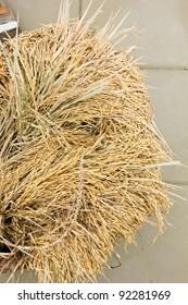The grain in the bin