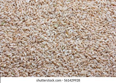 Grain brown rice background