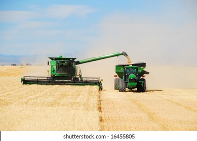"A grain combine or ""thrasher"" unloads a bin of grain into a ""tender"" trailer while continuing to harvest grain."