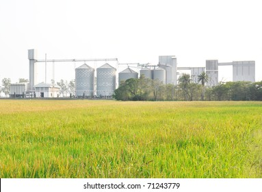 A grain co-op feed mill facility
