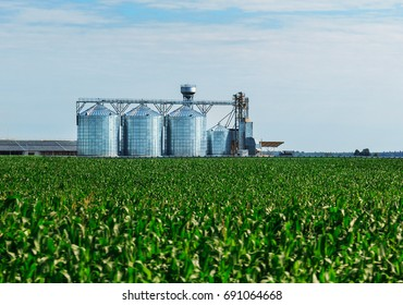 Grain in corn Field. Set of storage tanks cultivated agricultural crops processing plant.