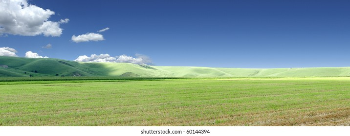 grain cultivated field in a summer day