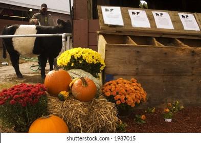 A grain display at a county fair