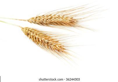 Grain ears