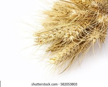 grain, ears, village, wheat