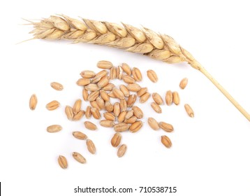 grain and ears of wheat isolated on white background. Top view