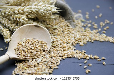 Grain and ears of wheat on black background