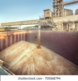 Grain elevator. Filling the hold. The wheat in bulk.
