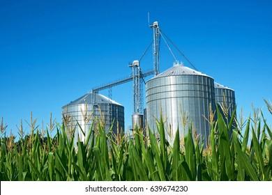 Grain elevator silos and midsummer corn in Southwestern Michigan
