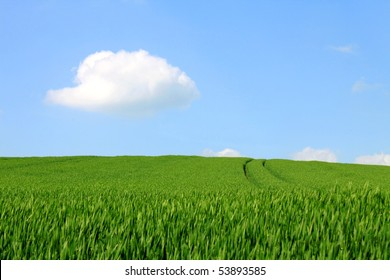 grain field blue sky white clouds