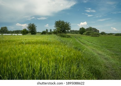 Grain field, road to the meadow and white clouds on the sky
