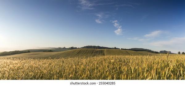Grain field sunrise Panorama in north Poland/ Grain field