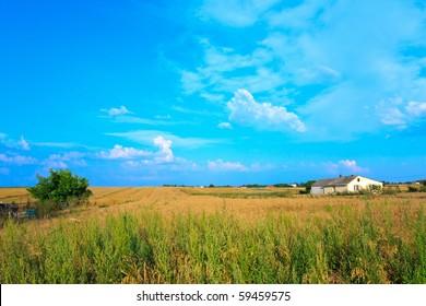 Grain fields under blue sky in polish village.